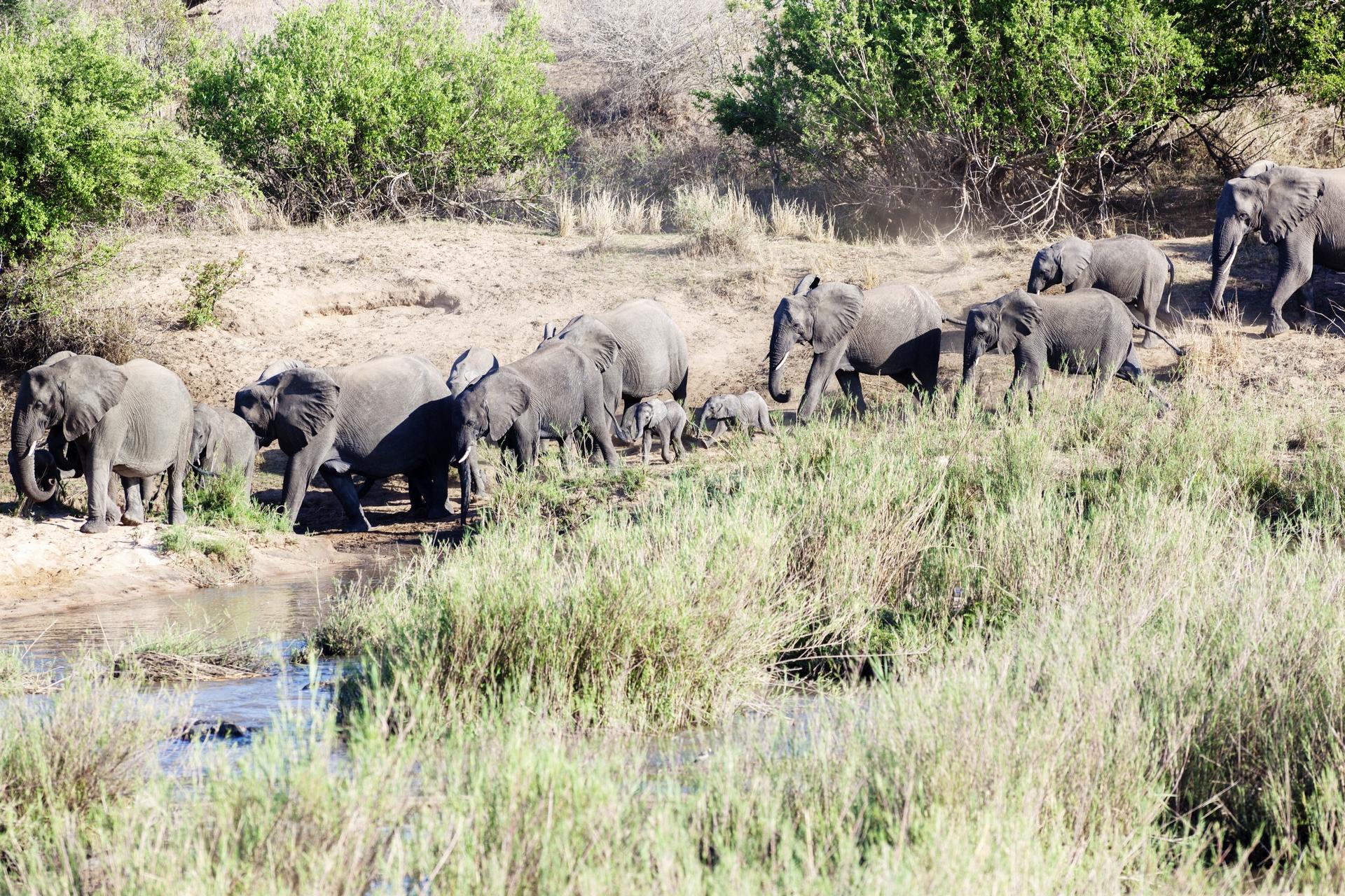 Elefanti nel Parco Kruger, Sudafrica