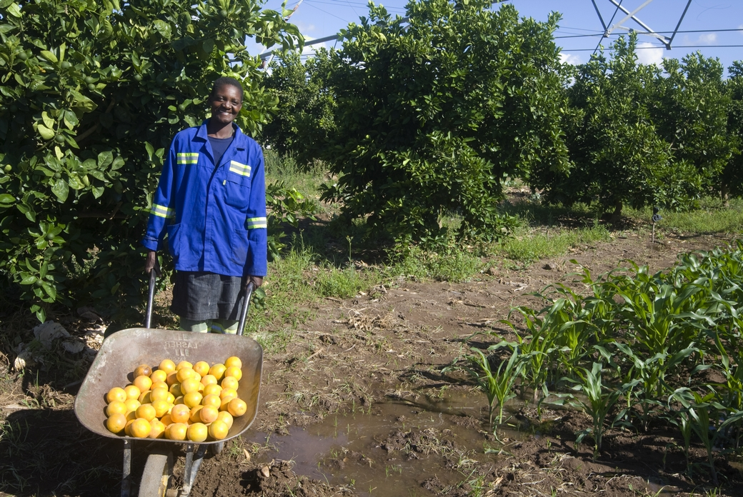 Arance in Zimbabwe - foto di Giovanni Diffidenti