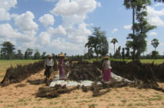 A group of farmers in the Dry Zone, Myanmar.
